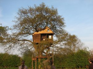 Treehouse in Spring