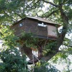 Brandon parva Treehouse